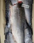 Кижуч дикая б/г, 1 шт рыбки 1,5-2,5 кг. Свежий улов 2020г