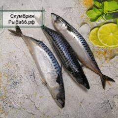 Скумбрия Фарерские острова Крупная 1 шт 400-600г очень вкусная и свежая